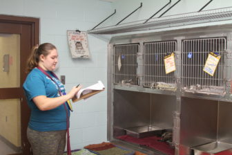 Volunteer Dora Gaughran goes through her daily checklist in one of the shelter's open-space cat rooms.