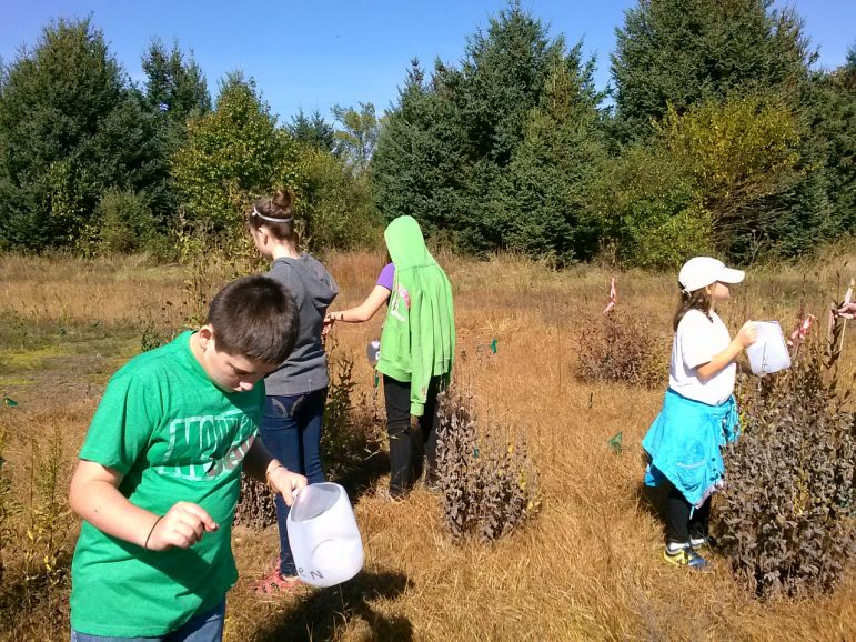 Volunteers collect native seeds that DNR will use to expand prairies. Credit: Heidi Frei.