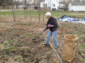 A volunteer rakes leaves at the perennial garden at the Eastside's Foster Garden in preparation fro the growing season. Photo by Maxwell Evans