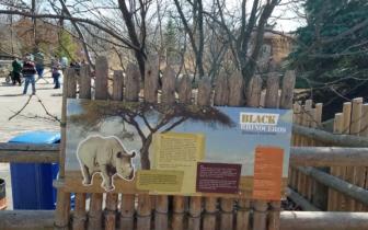 Rhino Exhibit informational board. Photo taken by Zach Sgro