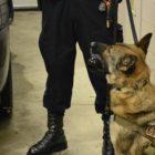East Lansing Police K-9 Quinn