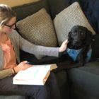 Otis, a chocolate lab, provides emotion support for his owner, Kelsey Reiner, a Michigan State law student.
