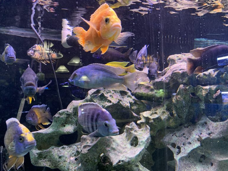 Preuss Pet features hundreds of colorful fish the aquatic section of the store.