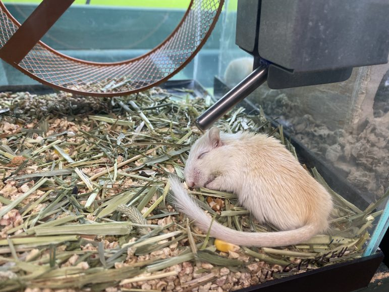 Preuss Pet carries mammals such as gerbils, hamsters and ferrets.