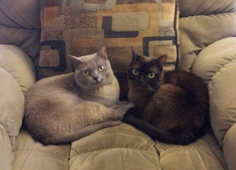 Holly Tiret's cats Sophie (left) and Luna (right)