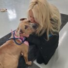 Rachel Koresky kisses a recent arrival the Detroit Pit Crew Dog Rescue will put in foster care and prepare for adoption.