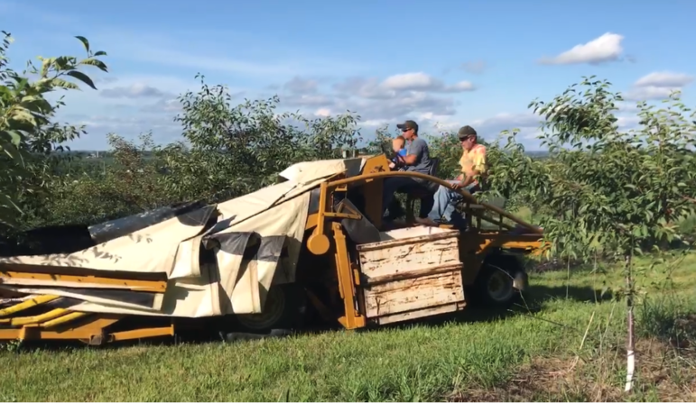 Family members operate a cherry shaker at the Hart-based DeRuiter Farms, Inc.