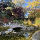 Morning view of the koi pond at the Shigematsu Memorial Garden at Lansing Community College.