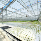 The indoor farming operation at Revolution Farms in Caledonia uses a broad-spectrum light.