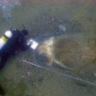 A scuba diver explores the wreckage of the lost P-39Q Airacobra at the bottom of Lake Huron.