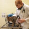 Qyuuie the cat receives a checkup at a Michigan Humane veterinary hospital.