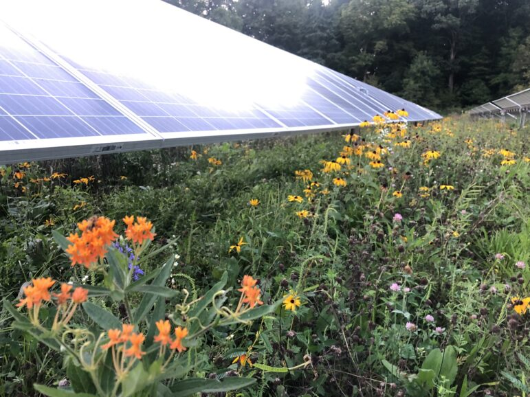 Solar panels can provide insect habitats.