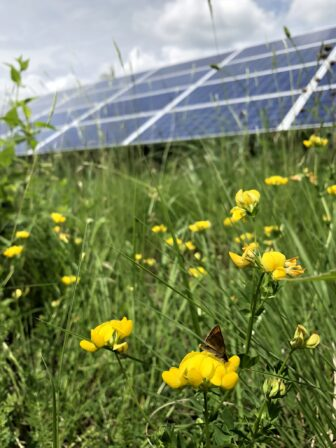An established pollinator habitat offers space to a butterfly