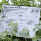 A vaccination form with a plant in the background