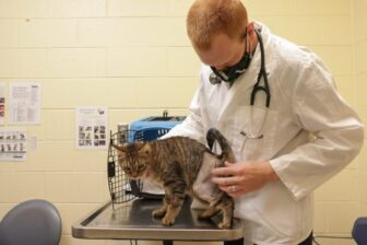 Qyuuie receives a checkup at a Michigan Humane veterinary hospital. Vets report an increase in new pet appointments during the coronavirus pandemic.