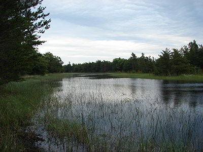 A scenic wetland view along Peterson Road.